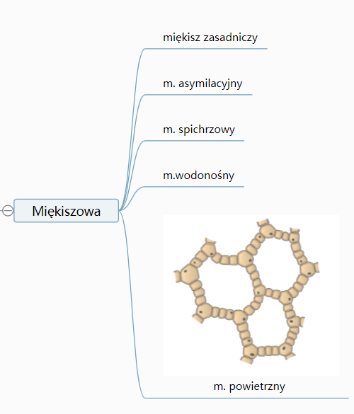 fragment mapy myśli z dodaną grafiką przedstawiającą tkankę roślinną